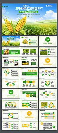 绿色健康玉米ppt动态模板