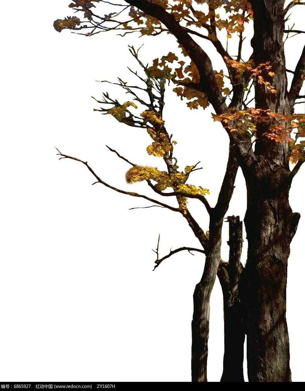 树头素材落叶树
