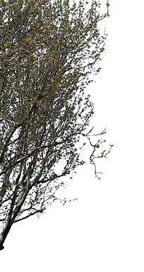树头素材枝头探出画面