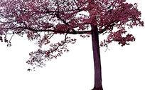 半棵树PS