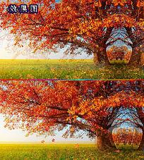 梦幻红枫叶树飘扬背景视频