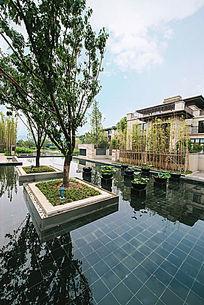 金山湖树池水景设计