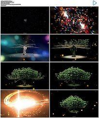 唯美绚丽小树生长成大树AE模板文件