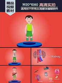 人类身体主要内脏介绍演示动画