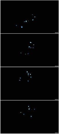 蓝色蝴蝶飞舞视频素材 mov