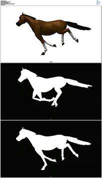 奔跑的马视频素材