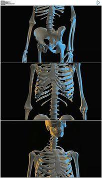 3D人体骨骼医学演示视频素材