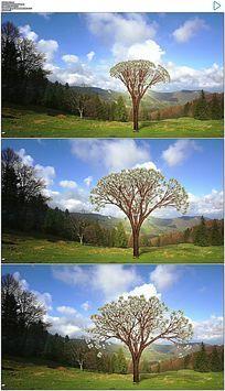 美元树生长动态视频素材 mov