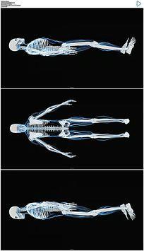 人体骨骼X射线展示视频素材