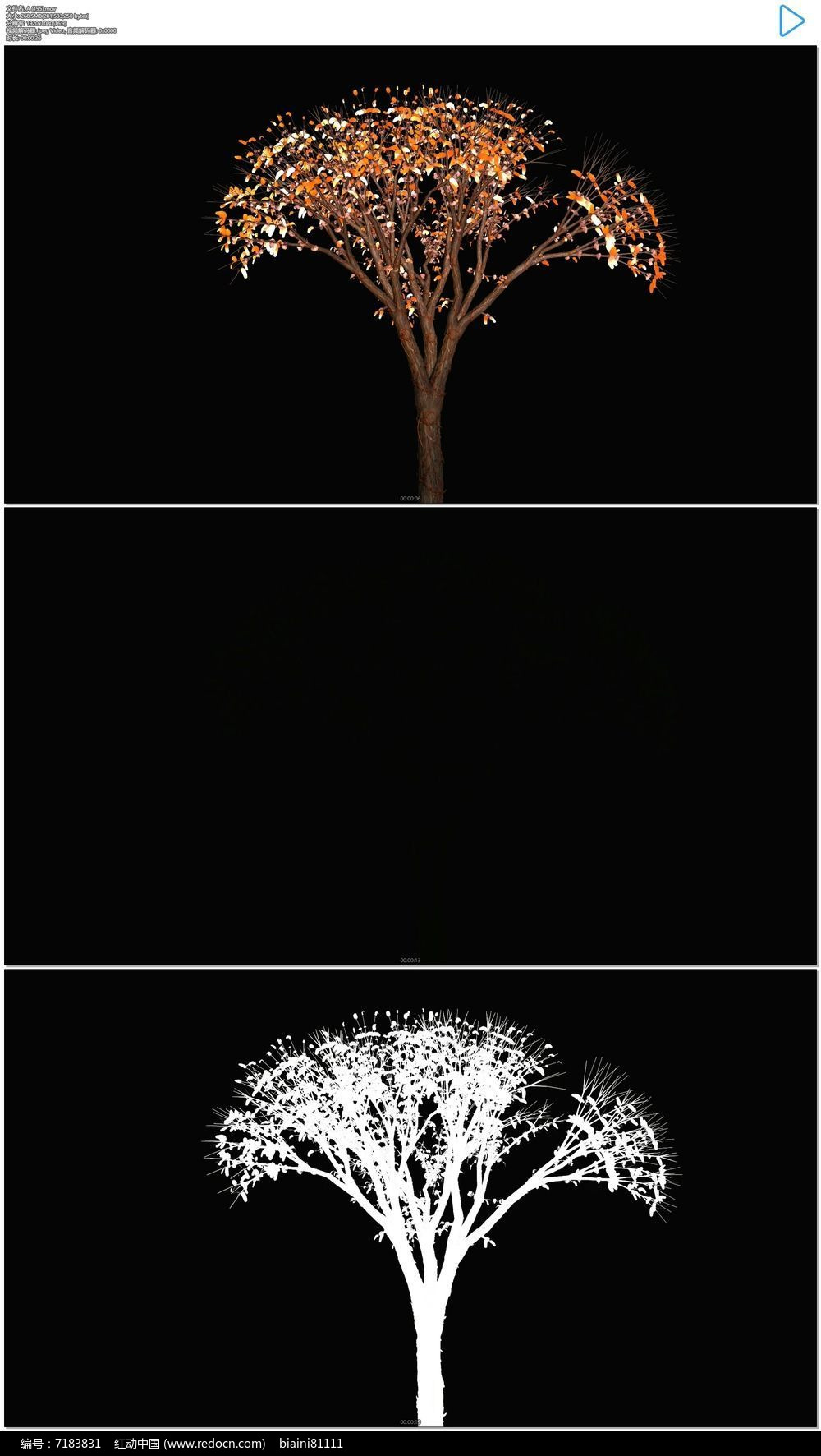 小树生长成大树视频素材