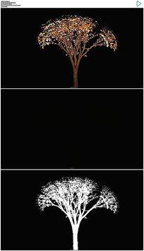 小树生长成大树视频素材 mov