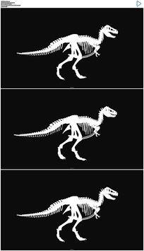 恐龙骨骼行走视频素材