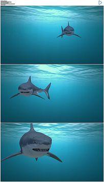 海底大白鲨实拍视频素材
