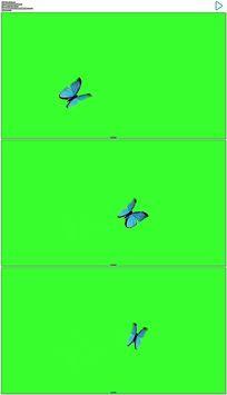 蝴蝶飞绿屏抠像视频素材