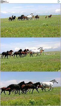 草原上奔腾的马群实拍视频素材