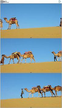 蓝天沙漠骆驼队实拍视频素材