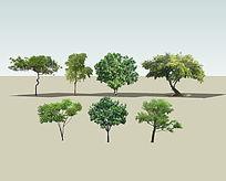 7种实景乔木模型