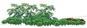 灌木群落模型