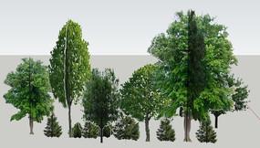 绿色乔木林