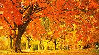 秋叶飘落树叶金秋天枫叶唯美背景视频素材