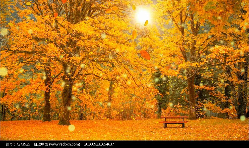 秋叶飘落树叶金秋天枫叶唯美led视频背景_红动网图片