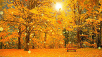 秋叶飘落树叶金秋天枫叶唯美led视频背景