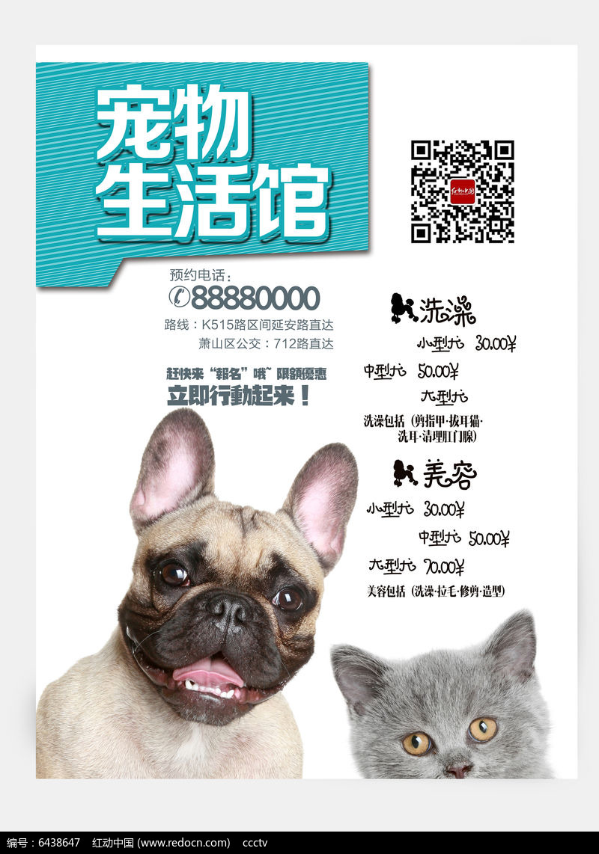 时尚可爱宠物海报