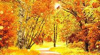 温馨浪漫秋叶飘落视频背景素材