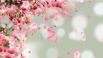 粉色春天花瓣飘LED大屏视频素材