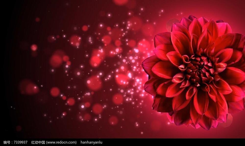 唯美红色花led大屏视频素材