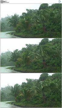 暴风雨吹打树木实拍视频素材