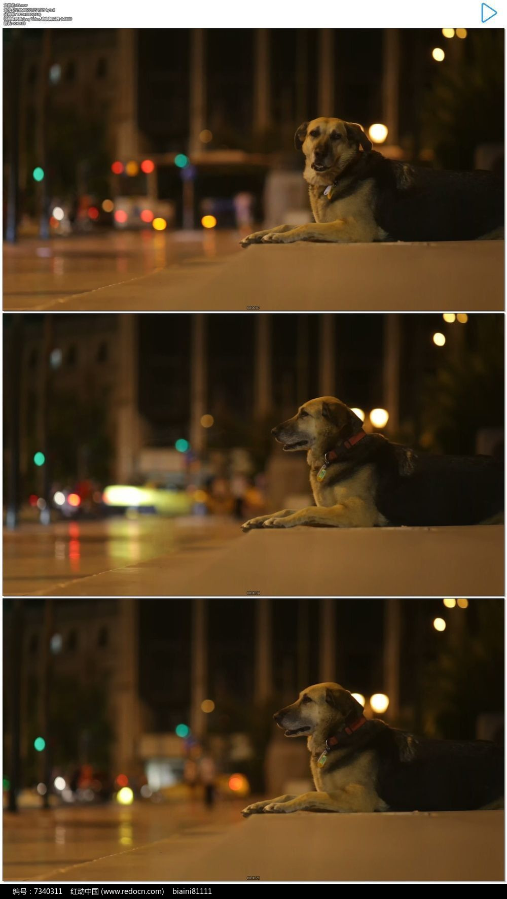 趴在夜晚街边的小狗实拍视频素材mov素材下载 编号7340311 红动网图片