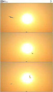 围绕太阳夕阳飞行的海鸥实拍视频素材