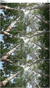仰拍夏日森林实拍视频