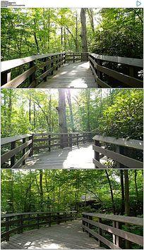 走在宁静的森林小道上实拍视频素材