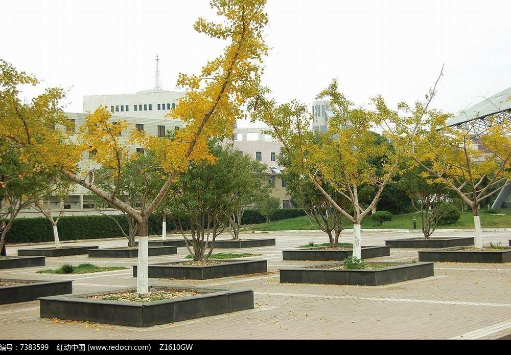 广场树阵坐凳意向图片