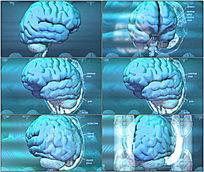 科技大脑旋转动态视频