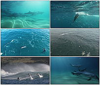 海洋精灵海豚视频