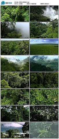 后期剪辑大自然热带雨林视频素材