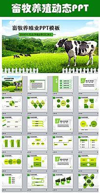 草原畜牧业奶牛养殖乳业PPT模板 pptx