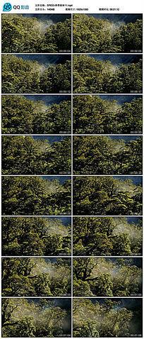 唯美大自然森林树木热带雨林实拍视频素材