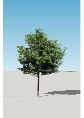 Sketchup真实树模型素材 skp