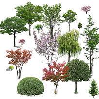 常用树ps素材