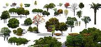 公园常用树ps素材