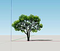 sketchup模型树2d真实乔木