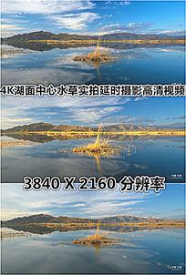 4K湖面水草湖水植物实拍高清视频