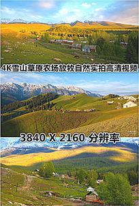4K农场草原放牧实拍高清视频素材