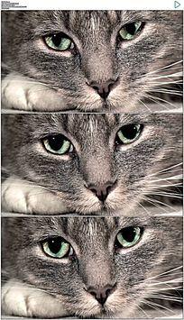 趴在地上的小猫实拍视频素材