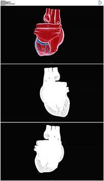 跳动的心脏视频素材