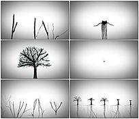 种子生长成森林水墨动画视频